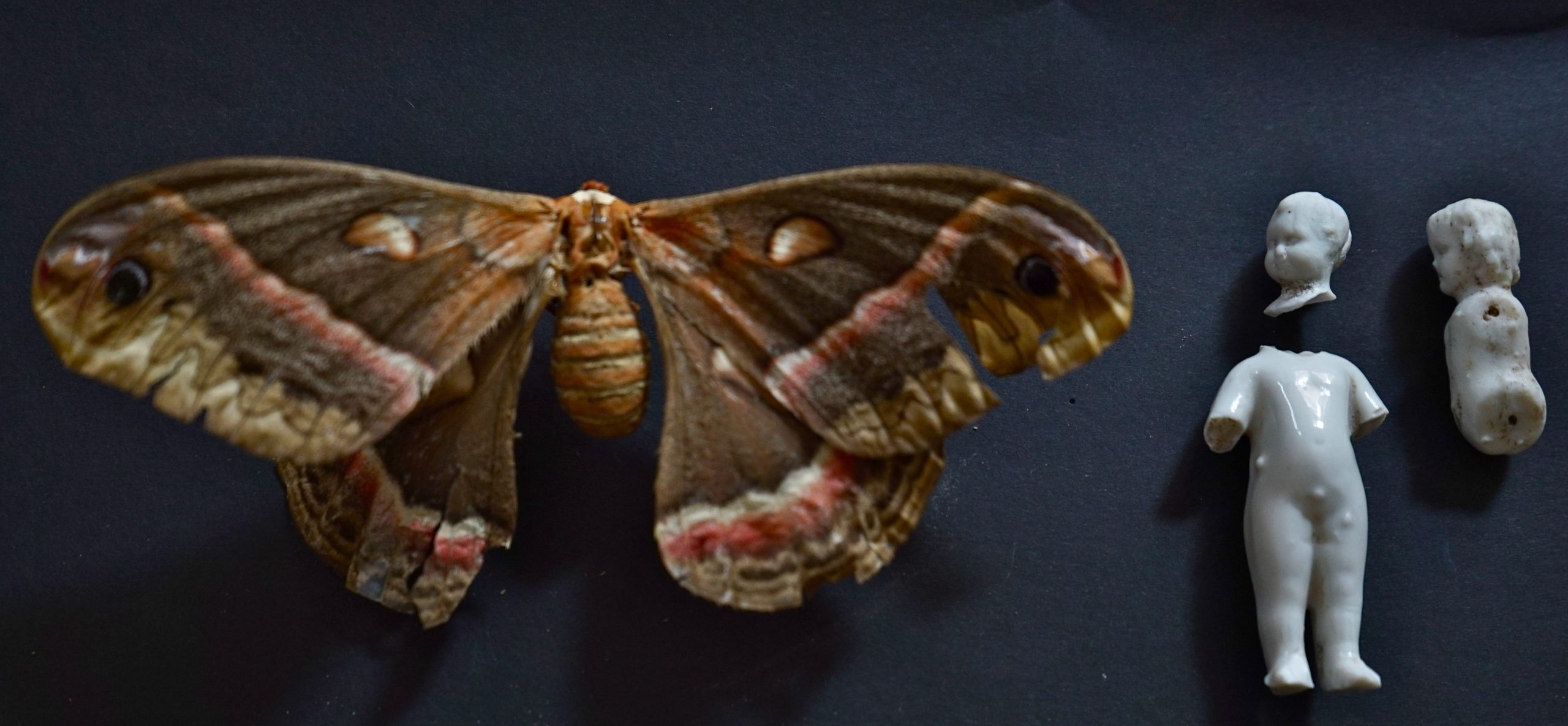 6 tage frei - SchmetterDINGE – vom Versuch sich selber Flügel zu verleihen